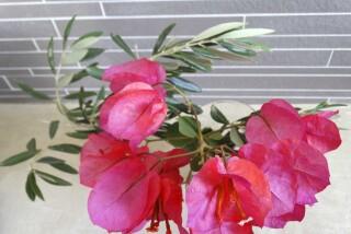 gallery anassa suites flower